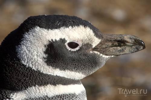 Магелланские пингвины и приключение на острове Магдалены!