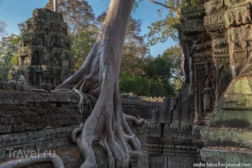 Побыть Ларой Крофт в храме Ta Prohm