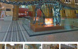 Виртуальные путешествия- Музей естествознания — Лондон, Великобритания
