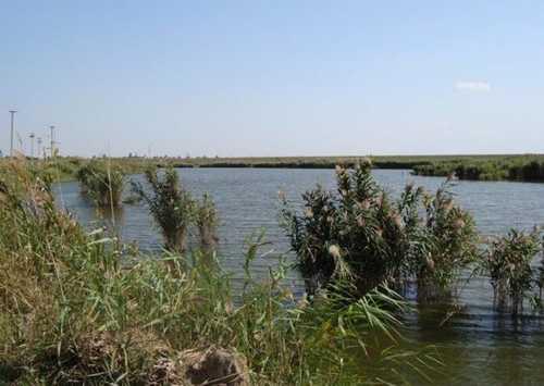 Река Воронцовка